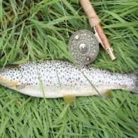 another nice Derwent trout fooled by a dry